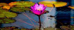 Petali: poesia di Goblin Cotone